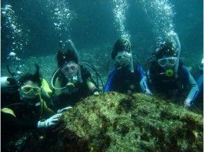 [東京大島伊豆]在第一時間享受到,甚至!潛水課程(1潛水)