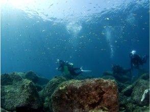 ライセンス保持者向け【西伊豆黄金崎で2ビーチダイビング♪】 穏やかで透明度の高い海で楽しむ♪約6時間