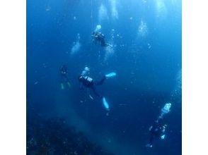[Kanagawa Enoshima] image of fan diving (Botodaibu)