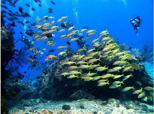 沖縄ダイビングサービスTOYBOX(トイボックス)