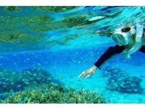 [Okinawa Ishigaki Island] snorkeling experience (half-day course)