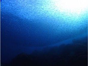 【静岡・西伊豆】1ボートダイビングガイド付き!伊豆屈指の景勝地「黄金崎」の沖でのんびり潜る!