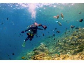 【沖縄・恩納村】初めてのダイビングでもゆったり安心!ボートで熱帯魚パラダイス体験ダイビング