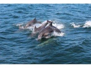 [Kumamoto Prefecture Amakusa] healing encounter wild dolphins trip! Dolphin watching image aboard the ship