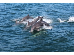 【Kumamoto ・Amakusa】 Relaxing Trip to Meet Dolphins ~ Dolphin Watching Boat Tour!