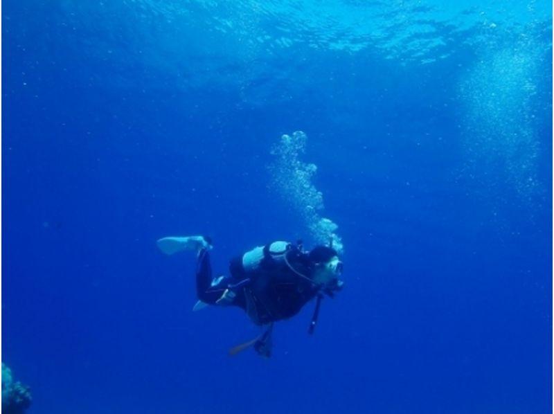 【沖縄・石垣島】ダイバースキルを高めよう!ダイビングレベルアップ講習の紹介画像