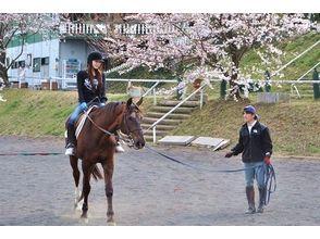 【群馬・利根川】体験乗馬+パカパカ散歩(外乗)の画像