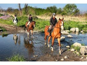 【群馬・利根川】ビジター外乗【乗馬】の画像
