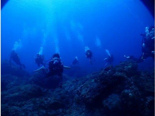 【東京・八丈島】八丈ブルーの海に大満足の2ダイブプラン!