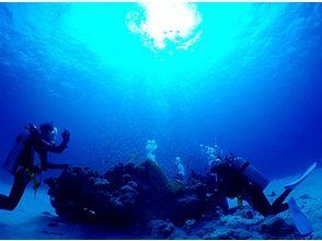 【沖縄・小浜島】八重山の海の感動を届けます!ファンダイビング 2~3DIVE(1日)の画像