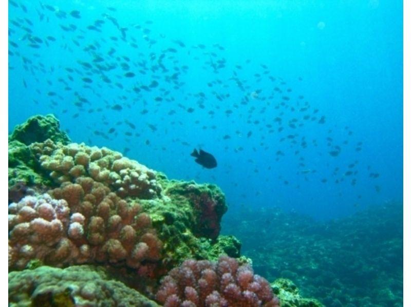 【沖縄・古宇利島】1グループ貸切!体験ダイビング!の紹介画像