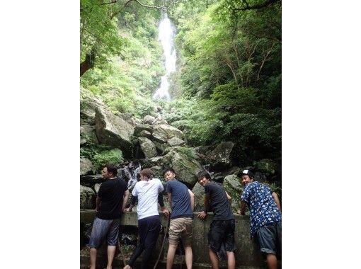 ★貸切★【鹿児島・奄美大島】ジャックと豆の木と滝とマングローブカヌーツアーの紹介画像