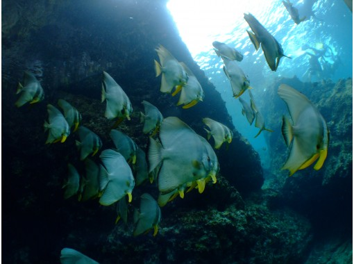 [Okinawa Blue Cave Snorkel] Many Review On the day reservations are welcome ★ gopro Photo movie Free transfer to your smartphone on the spot ♪ Feeding experience, sandals freeの紹介画像