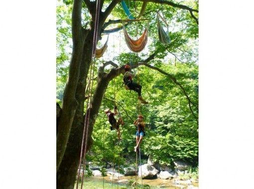 樹上満喫 木のぼりツアー