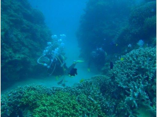 【沖縄・恩納村青の洞窟ボート】コロナ感染予防対策中!『貸切!青の洞窟体験ダイビング』写真データサービス