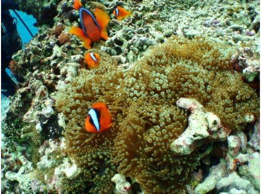 【沖縄・恩納村】約50分楽しめる幻想的な海の世界!「青の洞窟」体験ダイビング 写真データサービスの紹介画像