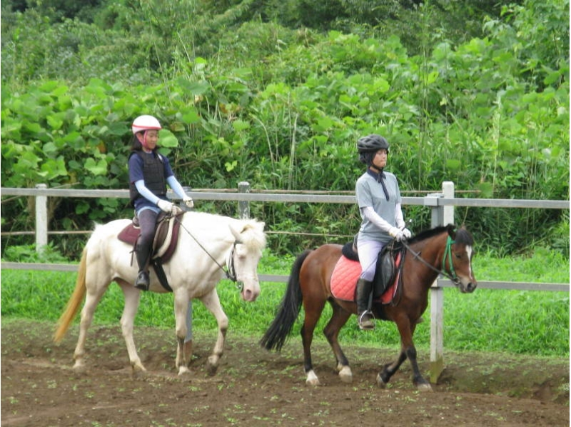 【茨城・石岡】家族やグループで楽しめる!体験乗馬【30分】の紹介画像