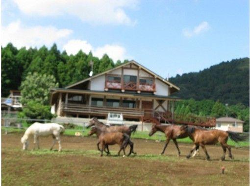【茨城・石岡】乗馬しながら森林浴を楽しもう!1時間10分の林道外乗散歩【初心者OK】