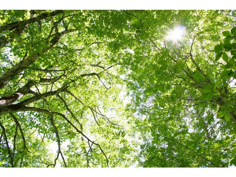 【福島・裏磐梯】裏磐梯を代表する名所をトレッキング!五色沼自然探勝路の紹介画像