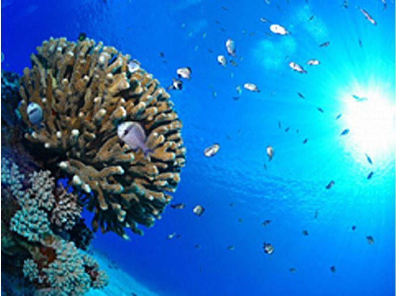 【沖縄・石垣島】遊びの幅を広げてもっと広い水中世界を見に行こう!ダイビングアドバンスコース(2日間)の紹介画像