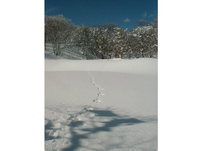 【新潟・妙高高原】残雪の笹ヶ峰トレッキングツアー!スノーシューで行く日帰り体験ツアーの紹介画像