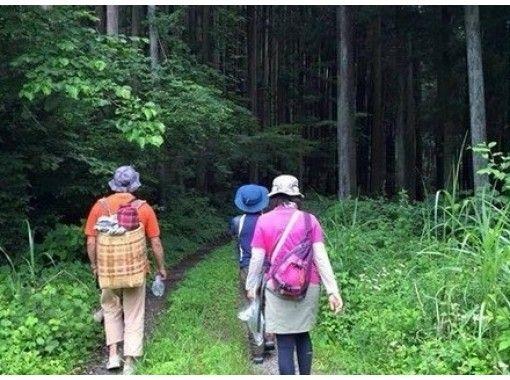 【東京・奥多摩】四季折々の自然を感じながらのんびり奥多摩ハイキング!ご家族で楽しめます!