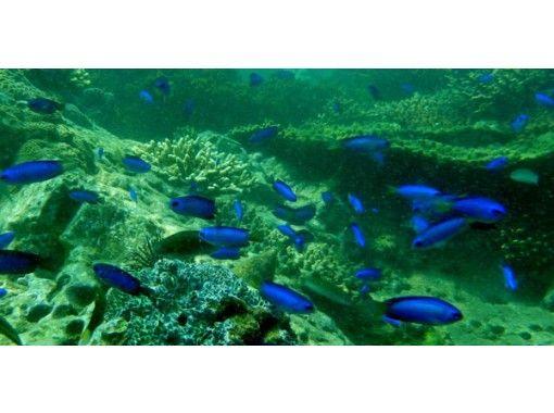 [Nagasaki / Takashima] Exciting! Snorkeling picnicの紹介画像