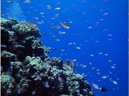 [沖縄-与那国島享受海底遺址·錘子觀看< C卡必答·範深潛>の紹介画像