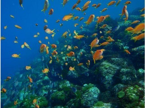 【静岡・伊豆】初心者・お子さま大歓迎!海で体験ダイビング(1日コース)