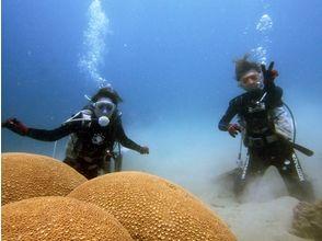珊瑚茶屋の画像