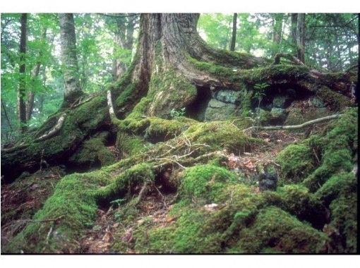 【静岡・富士】青木ヶ原樹海トレイルウォーク「躍動の森 富士山原生林を歩く」プライベートツアー