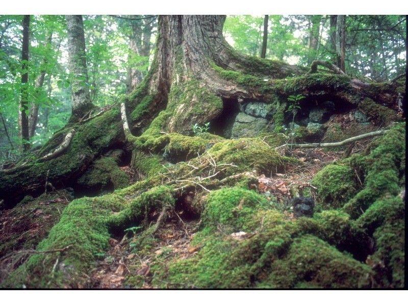 青木ヶ原樹海トレイルウォーク『躍動の森 富士山原生林を歩く』の紹介画像