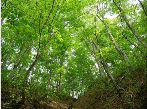 【青森・白神山地】神秘の自然を五感で感じるトレッキング「ブナ林散策道満喫コース」プロガイド付き!