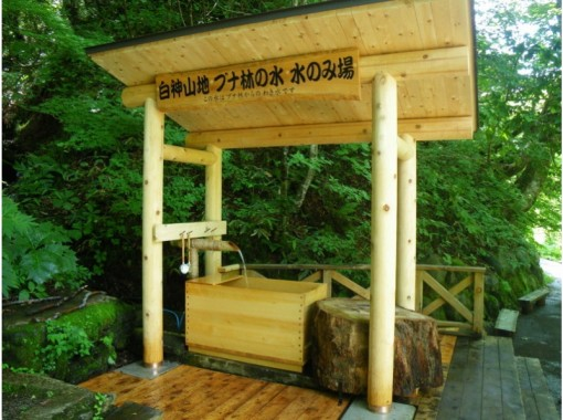 """[Aomori Shirakami Mountains] Trekking to experience the mysterious nature with the five senses """"Beech forest trail course"""" with a professional guide!の紹介画像"""