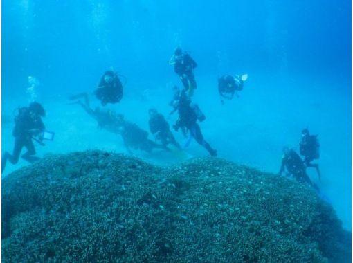 【沖縄・座間味】慶良間諸島・座間味の夜の海を満喫!ナイトダイビング