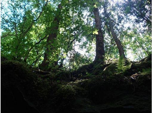 【山梨県・南都留】秋限定!ネイチャーガイドツアー樹海散策コース(60分)