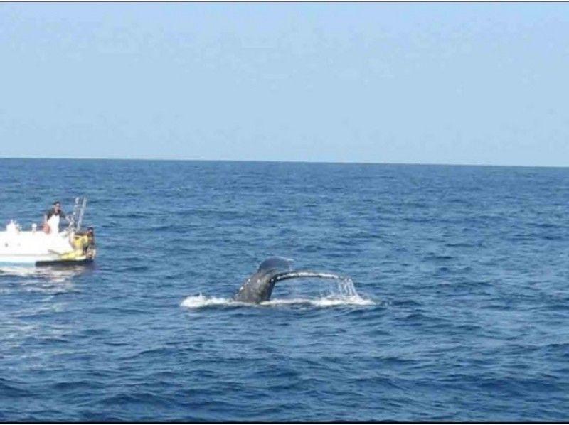 【沖縄・座間味】クジラを近くで見てみよう!ホエールウォッチング(Aコース)の紹介画像