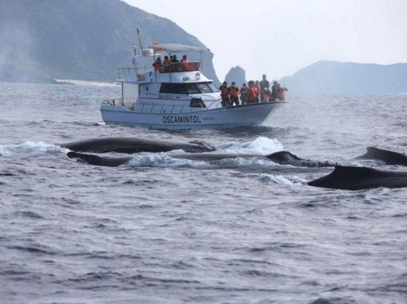 【沖縄・座間味】渡名喜、座間味を周遊!クジラを近くで見てみよう!ホエールウォッチング(Bコース)の紹介画像