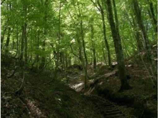 【青森・白神山地】トレッキング/ブナ林散策道&暗門第3の滝コースで神秘の自然を五感で感じる!の紹介画像