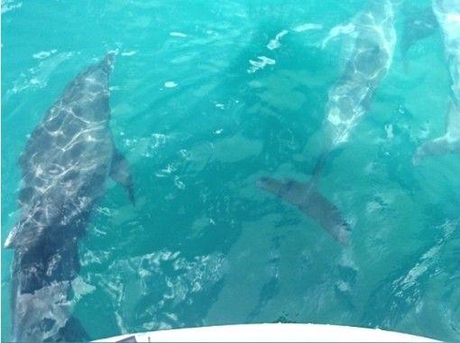 【熊本・天草】野生のイルカに遇いに行こう!イルカウォッチングツアー