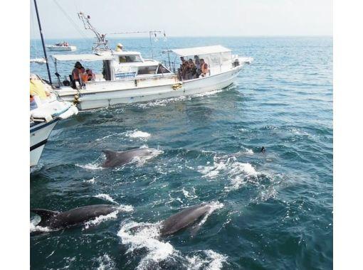 [熊本/天草]我們去看看野生海豚吧!海豚觀賞之旅の紹介画像