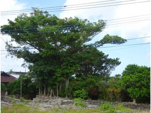 【鹿児島・沖永良部島】C.トレッキング「植物散策・森林浴・季節の花めぐり」現地スタッフによるガイド付