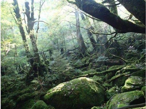 【鹿児島・屋久島】神秘的な「苔むす森」を堪能!白谷雲水峡トレッキング(半日コース)
