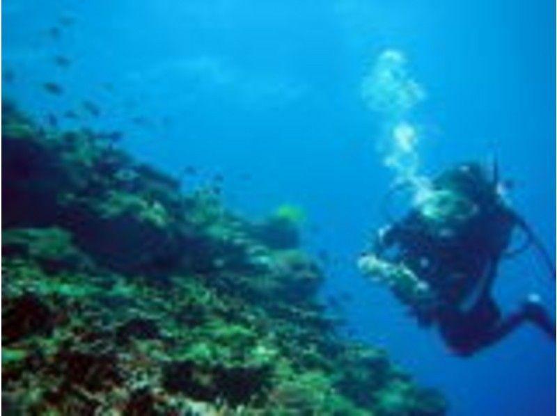 【沖縄・国頭】沈没船ツアーもあり!ファンダイビング今帰仁ボートエリア<2ボートダイビング>の紹介画像