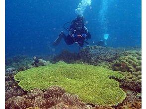 ブルーアドベンチャー沖縄の画像
