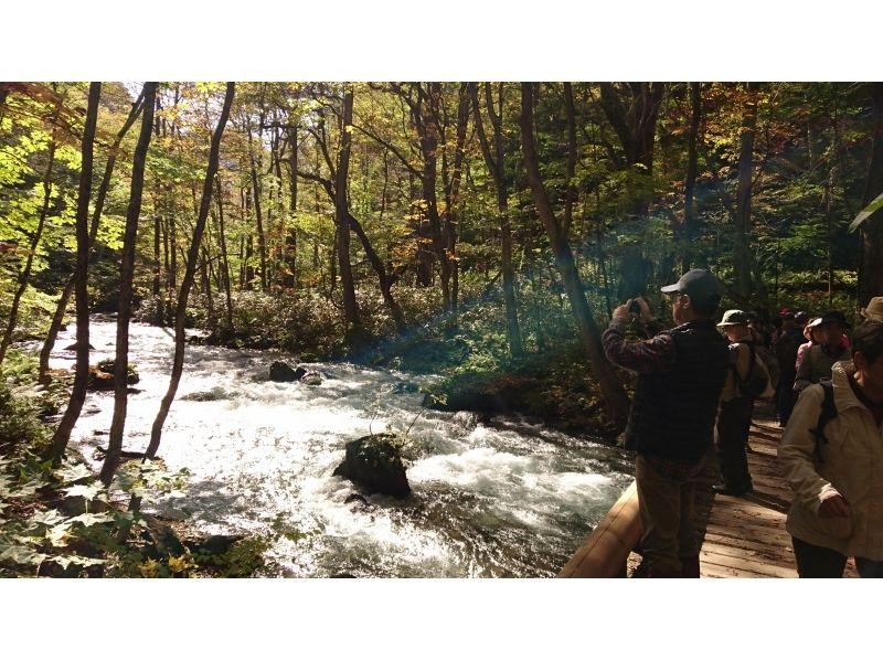 【青森・十和田】奥入瀬渓流トレッキング【十和田湖国立公園】ゆっくりご案内3時間30分コースの紹介画像