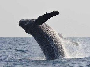 座間味村ホエールウォッチング協会(Zamami Whale Watching)の画像