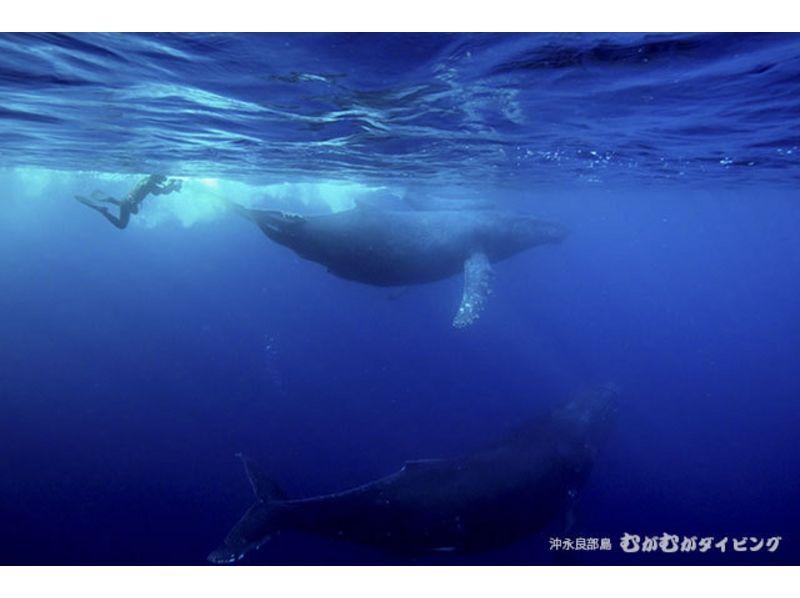 【鹿児島・奄美群島沖永良部島】感動体験!クジラスイムの紹介画像