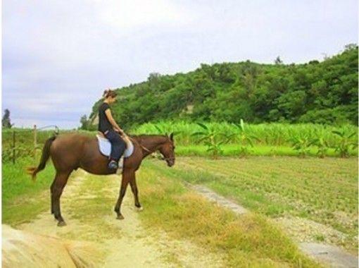 【沖縄・宮城島】Go to  地域共通クーポン利用可  乗馬で海と林を楽しもう!ビーチと林トレッキング(90分コース)