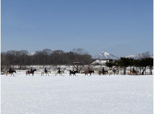 【北海道・恵庭】乗馬で北海道の自然を満喫しよう!ホーストレッキング体験【2時間】の紹介画像